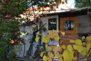 Autumn leaves shed door