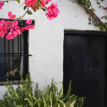 Dark door with bright pink flowers