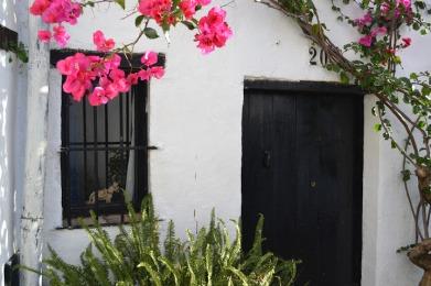 Dark door with bright pink flowers
