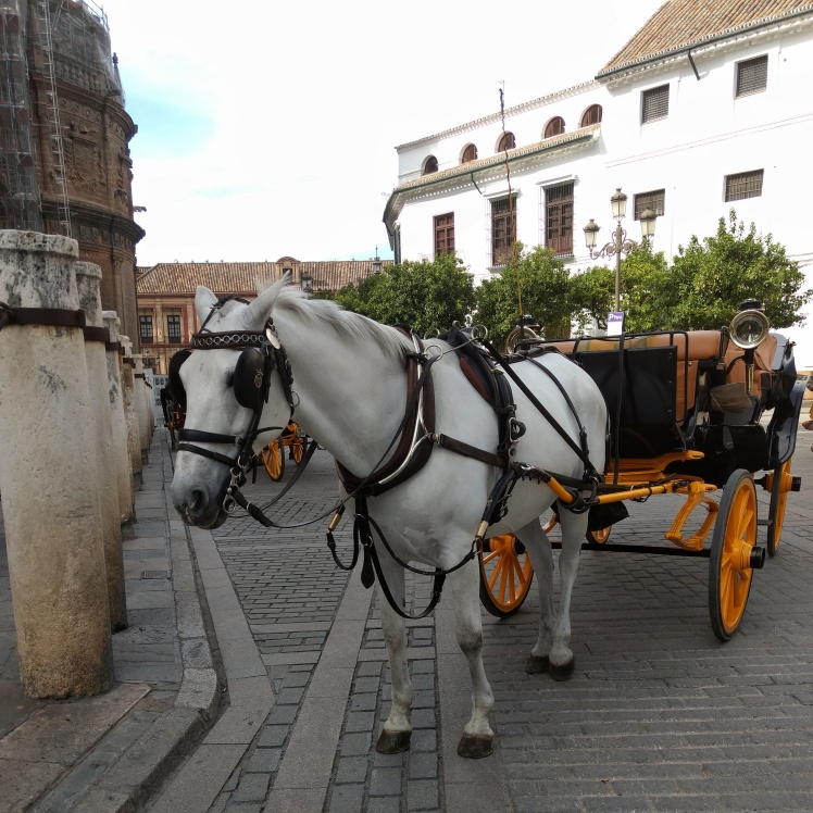 White horse and dark carriage with yellow wheels outside Seville cathedral